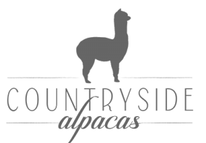 Countryside alpacas